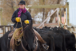 Wyoming cowgirl, Skye Clark, working cows, Afton Wyoming<br /> <br /> My photos are not to be used for anti public land ranching interests. The cowboys of the west are under assault because many don't like to see their cows on public land. I have written a couple of articles articulating the problem.