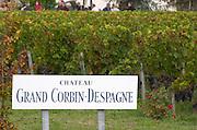 Vineyard. Chateau Grand Corbin Despagne, Saint Emilion Bordeaux France