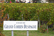 Vineyard. Chateau Grand Corbin Despagne, Saint Emilion Bordeaux France