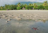 Sea star in shallow water at Tua Koin resort, a small lodge on the beach near Vila on Atauro Island, Timor-Leste (East Timor)