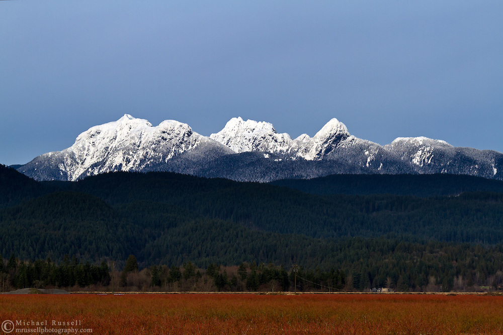 """The """"Golden Ears"""" mountains of the Coast Range from a blueberry field in Pitt Meadows, British Columbia, Canada"""