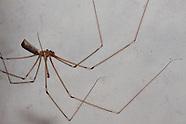 Spinnen - Spiders