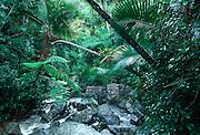 PUERTO RICO, LANDSCAPE El Yunque Rainforest, La Mina River