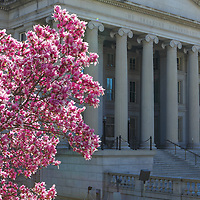 Historic Washington DC landmark photography image displaying The Treasure Department framed by peaking spring blossom.   <br /> <br /> Washington DC photos are available as museum quality photography prints, canvas prints, acrylic prints or metal prints. Fine art prints may be framed and matted to the individual liking and decorating needs: <br /> <br /> https://juergen-roth.pixels.com/featured/the-treasure-department-juergen-roth.html<br /> <br /> All photographs are available for digital and print image licensing at www.RothGalleries.com. Please contact me direct with any questions or request.<br /> <br /> Good light and happy photo making!<br /> <br /> My best,<br /> <br /> Juergen<br /> Prints: http://www.rothgalleries.com<br /> Photo Blog: http://whereintheworldisjuergen.blogspot.com<br /> Twitter: @NatureFineArt<br /> Instagram: https://www.instagram.com/rothgalleries<br /> Facebook: https://www.facebook.com/naturefineart