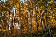 San Juan Mountains, near Ridgway, Colorado, USA. Owl Creek-Cimarron Road is an old cattle-drive trail winding up to Owl Creek Pass at 10,114 feet in Uncompahgre National Forest.