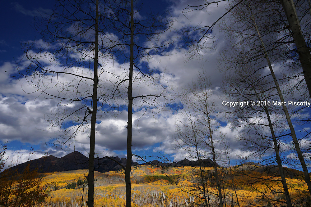 SHOT 10/2/16 4:38:53 PM - Fall foliage trip to Crested Butte, Co. Kebler Pass (el. 10,007 ft.) is a high mountain pass in Colorado. Changing aspens and the Raggeds Wilderness along Kebler Pass just outside of Crested Butte, Co. Populus tremuloides is a deciduous tree native to cooler areas of North America, one of several species referred to by the common name aspen. It is commonly called quaking aspen,trembling aspen or American aspen. The trees have tall trunks, up to 25 meters (82 feet) tall, with smooth pale bark, scarred with black. The glossy green leaves, dull beneath, become golden to yellow, rarely red, in autumn. The species often propagates through its roots to form large groves originating from a shared system of rhizomes. (Photo by Marc Piscotty / © 2016)