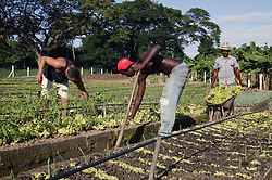 Men working on Organiponico 14 de junio; Pinar del Rio; Cuba,