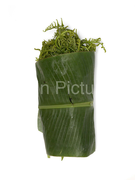 Pak Koud, a type of fern, collected from the wild and sold at the roadside market in the Tai Dam village of Ban Na Mor,Oudomxay province, Lao PDR. In the past the bulk of products collected or caught from the wild were used for family consumption, but nowadays a substantial proportion of products are sold in the markets for cash. Ban Na Mor market is ideally situated on route 13 which goes to the border with China allowing them to take advantage of the many Chinese tour buses and businessmen passing through.