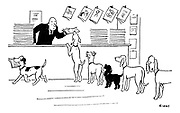 (Dogs form a queue in a newsagent for their masters' newspapers)