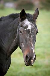 Senior Horse<br /> <br /> Fred in de weide - Kieldrecht 2005<br /> <br /> Photo© Dirk Caremans