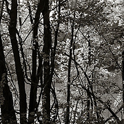 West Branch Housatonic River
