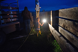 Four year old Andy Anderson, dressed only in his rubber boots and underwear,  rushes to help his parents Andrew Anderson and Hilary Zaranek to save a cow in the middle of the night who was having problems delivering in the Centennial Valley of Southwestern Montana, June 13, 2012.  Ranching is tough business with most working 14-16 hour days in the calving season. Spurred by growing consumer concern over meat's environmental impact and concerned about the long-term viability of their livelihood, a cohort of ranchers is trying to apply the understanding gleaned from the science of ecology to livestock management.