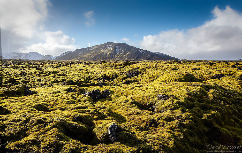 Moss and mountain