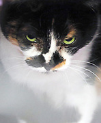 A green-eyed beauty in a holding area. (Alan Berner / The Seattle Times)