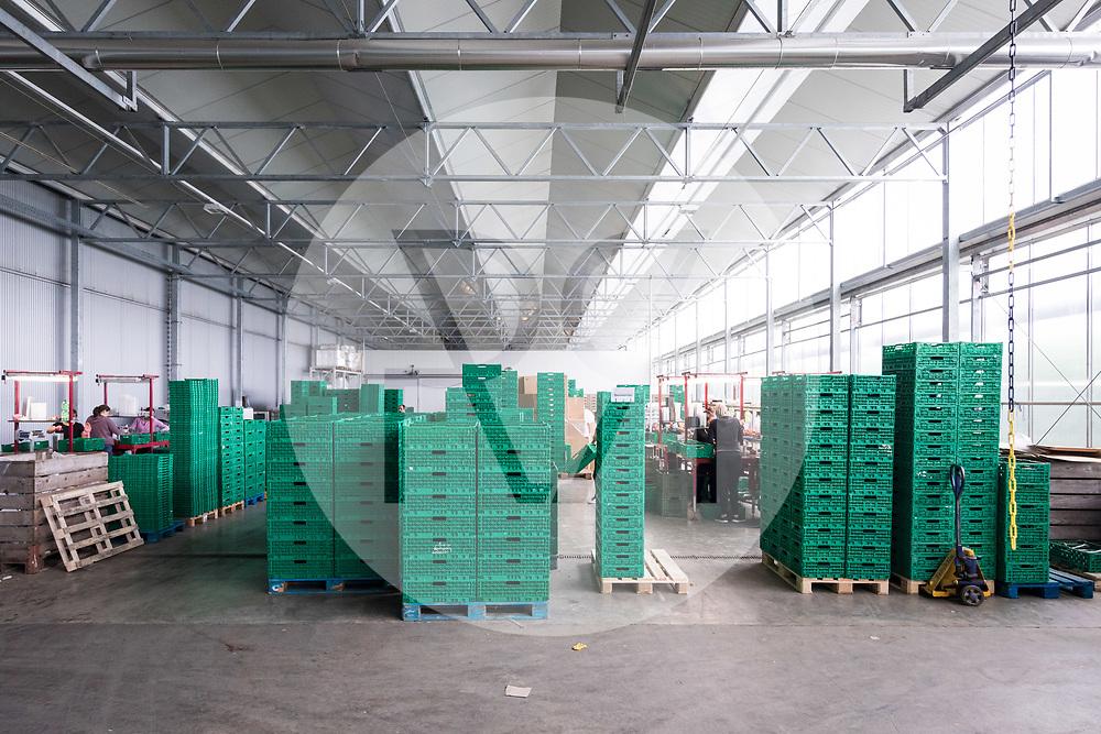 SCHWEIZ - NIEDERBIPP - Kisten im Lager bei Bösiger Gemüsenkulturen AG - 21. Juni 2019 © Raphael Hünerfauth - http://huenerfauth.ch