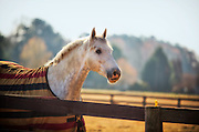 A horse staring over a fence on a farm.
