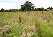 Grassy path through green fields, Sutton, Suffolk, England, UK