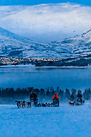 Dog sleds coming up a hill with Hakoya Island behind, Tromso Wilderness Centre (Tromso Villmarkssenter), Kvaloya Island, near Tromso, Arctic, Northern Norway.