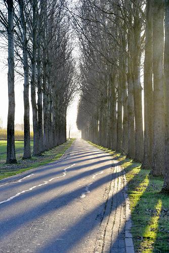 Nederland, Batenburg, 28-11-2016Even buiten het dorp is een landweg met aan weerszijden bomen waar de zon tussendoor schijnt .