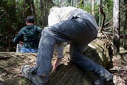 Hugh Maughan Transversing Tree