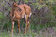 A South African Safari