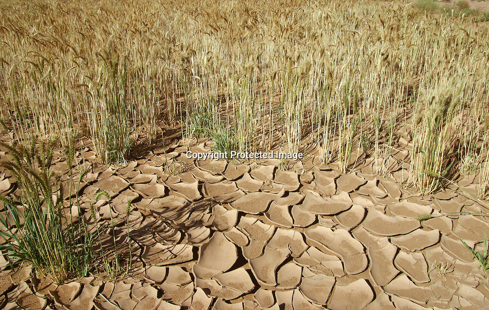 drought in morocco