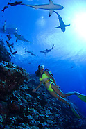 Sharks and Scenics in Yap