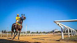 Array Train com a condução de W.P.Silva vence o páreo de 1.000m para potrancas de 3 anos sem vitória. FOTO: Jefferson Bernardes/ Agência Preview
