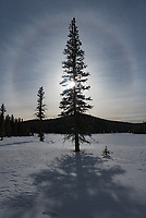 While cross country skiing in the Bighorn Mountains, this vivid halo appeared around the sun. I was able to get a few pictures above this meadow before it faded away.