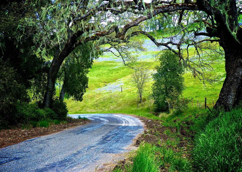 We are often shooting in the Central Coast region of California in Springtime.  This road, CA G-16, winds for miles from Highway 1 to Highway 101, through oak trees and hills clothed in green grass and wildflowers this time of year.