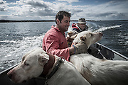 """""""Berras"""" and his tracking dogs. Montaria na Herdade da Serranheira, Fevereiro 2014.<br /> <br /> """"The Pose and the Prey""""<br /> <br /> Hunting in my imagination was always more like taxidermy — as if the prey was just a mere accessory of the hunter's pose for his heroic photograph — the real trophy.<br /> <br /> When I decided to document the daily lives of Portuguese hunters, I had in my memory the """"cliché"""" from the photographer José Augusto da Cunha Moraes, captured during a hippopotamus hunt in the River Zaire, Angola, and published in 1882 in the album Africa Occidental. The white hunter posed at the center of the photograph, with his rifle, surrounded by the local tribe.<br /> <br /> It was with this cliché in mind that I went to Alentejo, south of Portugal, in search of the contemporary hunters. For several months I saw deer, wild boar, foxes. I photographed popular hunting and private hunting estates, wealthy and middle class hunters, meat hunters and trophy hunters. I photographed those who live from hunting and those who see it as a hobby for a few weekends during the year. I followed the different times and moments of a hunt, in between the prey and the pose, wine and blood, the crack of gunfire and the murmur of the fields .<br /> <br /> I was lucky, I heard lots of hunting stories. I found an essentially old male population, where young people are a minority. Hunters, a threatened species by aging and loss of economic power caused by the crisis in the South of Europe.<br /> <br /> The result of this project is this series of contemporary images, distant from the """"cliche"""" of 1882.<br /> <br /> — Antonio Pedrosa"""