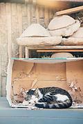Cat sleeping at market in Casablanca, Morocco