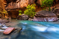 As the canyon walls of the Narrows in Zion National Park glow with sunshine, the cool blue waters of the Virgin River rush past the large boulders that have fallen from above.