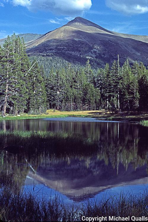 Mt Dana reflected in a roadside tarn within Yosemite National Park.