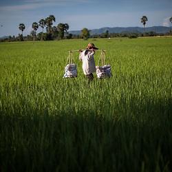 Cambodia farming