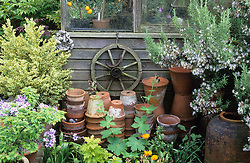 A display of old terracotta pots, cartwheel and ornaments around outside of greenhouse