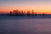 Lake Mattamuskeet in winter