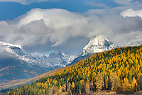 Mount Brown 2610 m (8563 ft) towers above forest dotted with autumn colrs, Glacier National Park Montana USA
