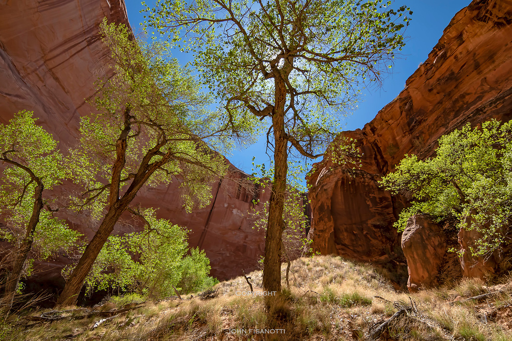Welcome shade in a hot canyon.