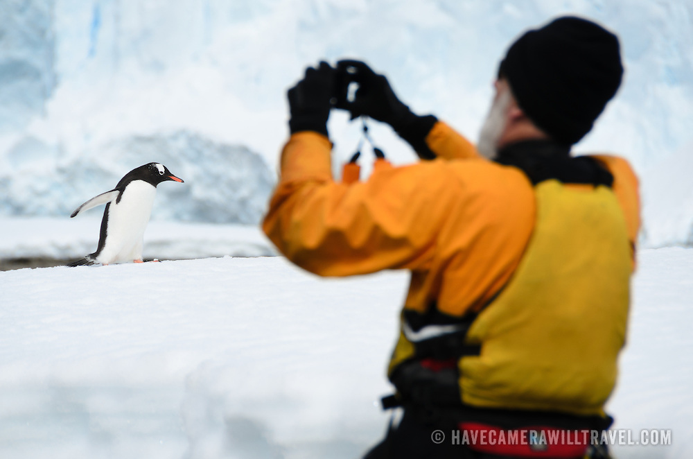 A man takes a photo of a Gentoo penguin walking on shore at Cuverville Island on the western side of the Antarctic Peninsula. Gentoo penguins are one of the most numerous types of penguin in this region.