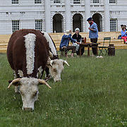 Pasture with Cows performs at Greenwich and Docklands International Festival, London, UK