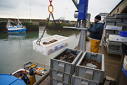 Pittenweem, Scotland, UK. 15 January 2020. Fresh shellfish, crab and lobster landed this morning at Pittenweem harbour in Fife. Fisherman Nick Irvine has two boats that catches shellfish, shrimp, velvet crab, brown crab and lobster. Much of his catch is exported to Asia and is busy at this time of the year because of upcoming Chinese New Year which increases demand and prices. This has helped to offset problems exporting into the EU because of new regulations.  Iain Masterton/Alamy Live News