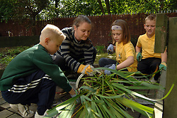 Children dig new plants into a school pond as part of the after school 'Green Gym' activity a pilot scheme run by the BTCV; All Saints Primary School; Cross Green; Leeds,