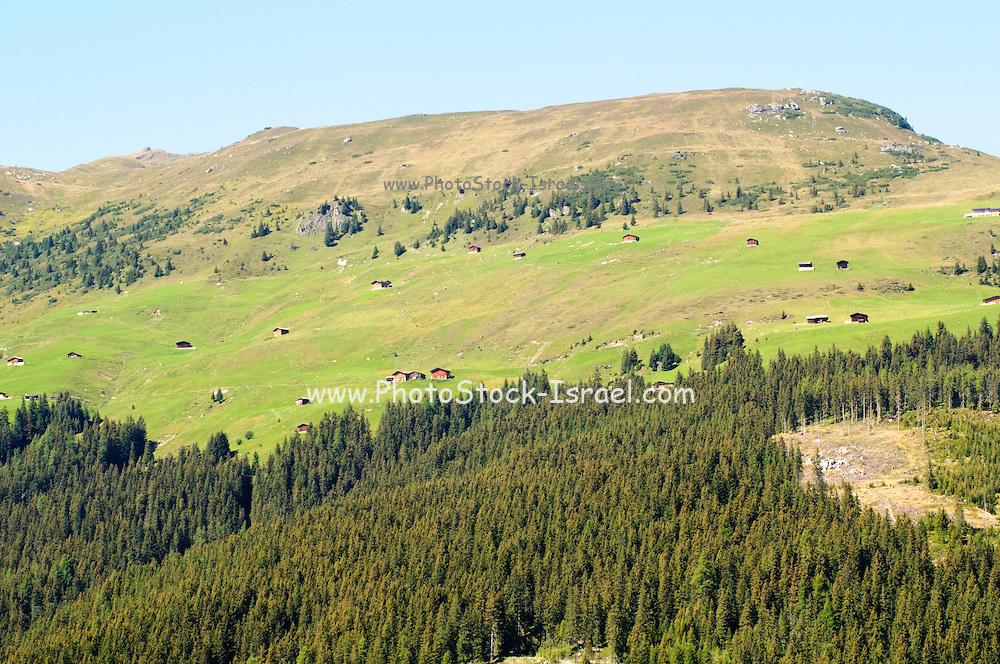 Alpine forest landscape. Photographed in Winnertal, Near Gerlos, Zillertal, Tirol, Austria