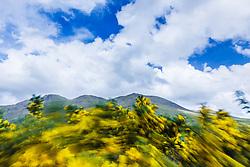 Gorse in the Sheeffrey Hills, County Mayo, Ireland