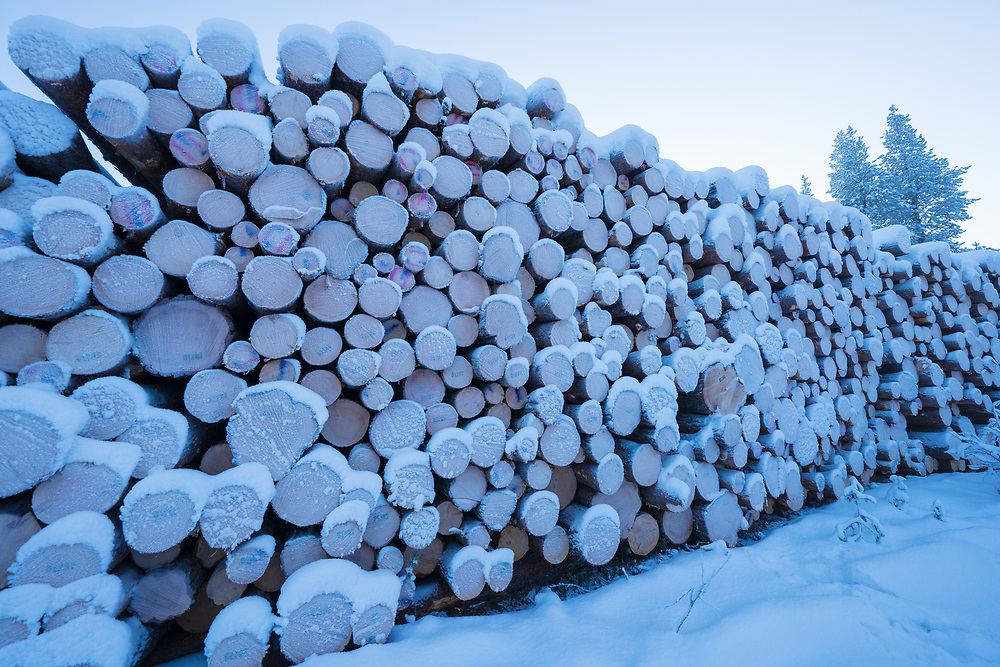 Timber piles with previously 300 year old-growth forest, Muonionalusta, Norrbotten, Sápmi, Lapland, Sweden