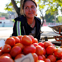 Central America, Cuba, Santa Clara. A Cuban girl sells tomatoes at a local farmer's market in Santa Clara.