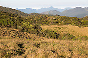 Montane grassland and cloud forest environment Horton Plains national park, Sri Lanka, Asia - distant Adam's Peak