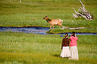 Visitors watch a cow elk crossing the Big Thompson River in Moraine Park, Rocky Mountain National Park. CO.