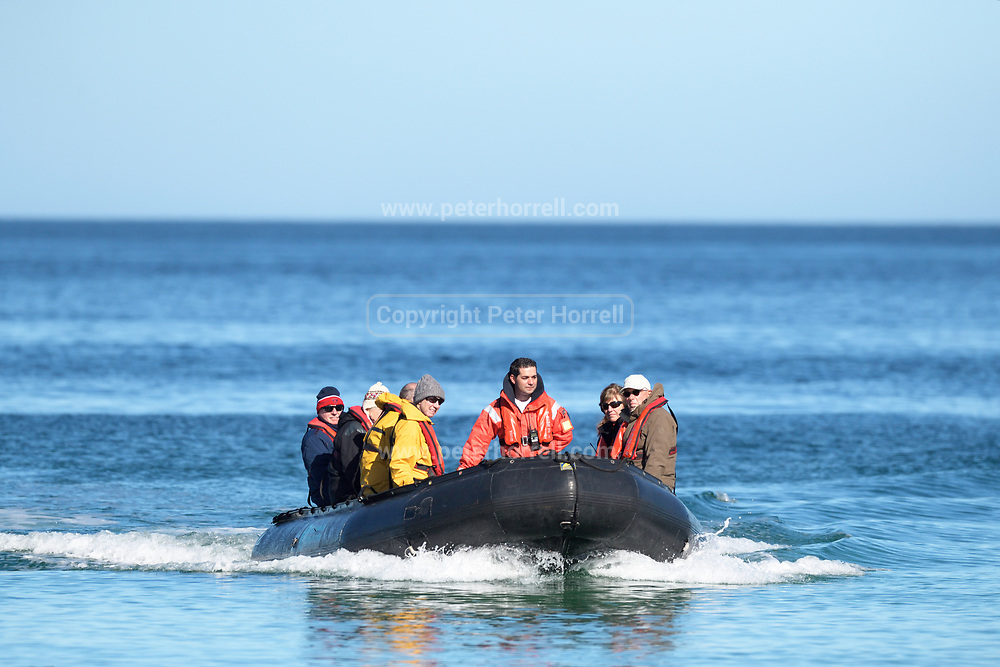 A zodiac brings people from the m/v Ortelius  to the beach at Carcass Island in the Falkland Islands (Las Malvinas) on Sunday 4th February 2018.